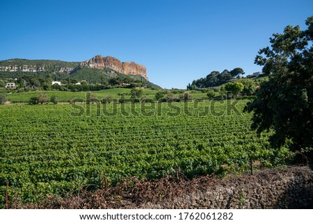 Cassis, France, Vineyards with the Cap Canaille in background Photo stock ©