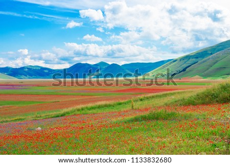 Castelluccio di Norcia, 2018 (Umbria, Italy) - The famous landscape flowering with many colors, in the highland of Sibillini Mountains, central Italy Foto stock ©