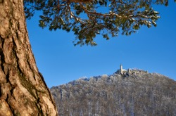 Castle also Stronghold (Teck) in winter on a clear evening with blue sky, many trees on the hill, big tree trunk of a pine tree in the foreground. Germany, Owen, Swabian alb.