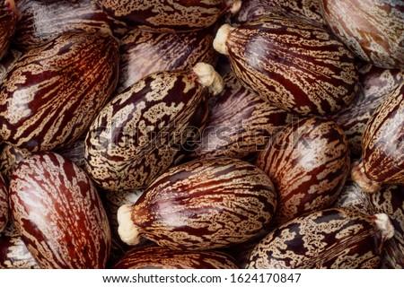 Castor oil seeds  as background.  Ricinus communis,  the castor bean  or castor oil plant close-up. Top view. Stock photo ©