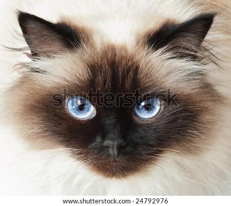 Stock Photo Cat