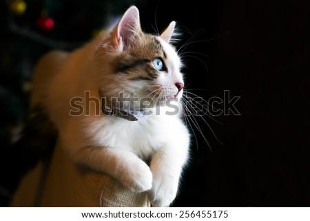 Cat #256455175