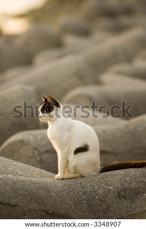stock-photo-cat-3348907.jpg