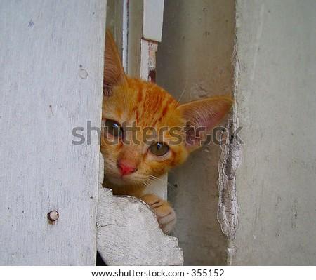 Cat. - stock photo