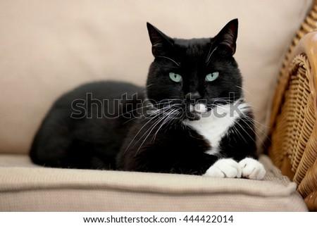 Cat Zdjęcia stock ©