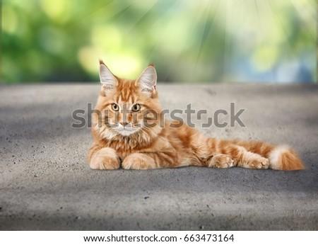 Cat. #663473164