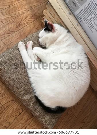 Cat - Shutterstock ID 686697931