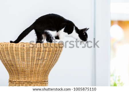 Cat about to jump from wicker stool at home