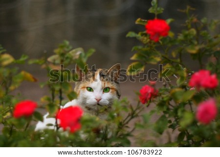 Cat among roses