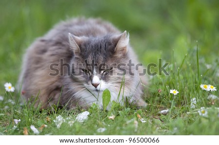 Cat among the daisies