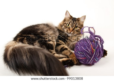 cat and a ball of thread