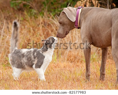 Cat and big dog sniffing noses