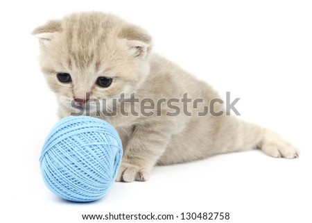 cat and blue wool ball isolated on white