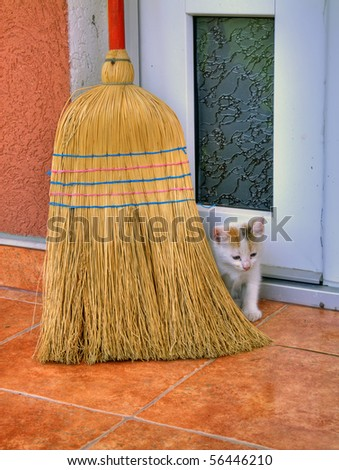Cat and broom.