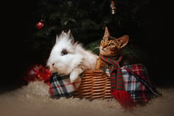 cat and bunny posing together in a basket under a christmas tree