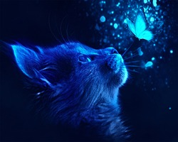 cat and butterfly with blue light effect