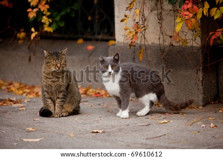 Cat and cat in the street