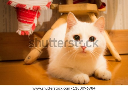 Cat and cats and kitten #1183096984