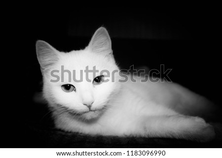 Cat and cats and kitten #1183096990