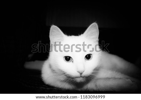 Cat and cats and kitten #1183096999