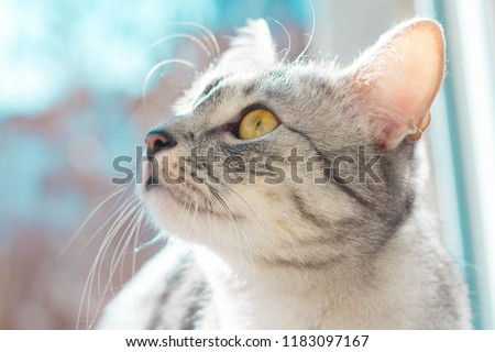 Cat and cats and kitten #1183097167