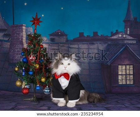cat and Christmas tree on the roof at night