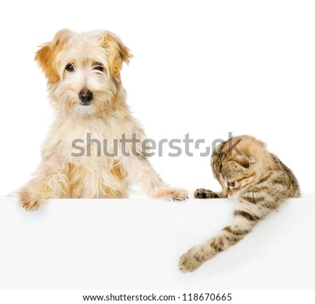 Cat and Dog above white banner looking at camera.  isolated on white background