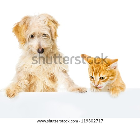 Cat and Dog above white banner. looking down. isolated on white background