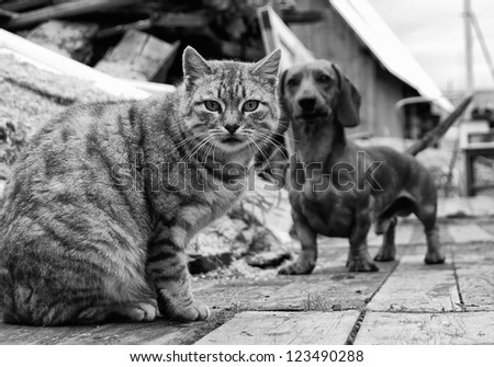 cat and dog are looking into the camera