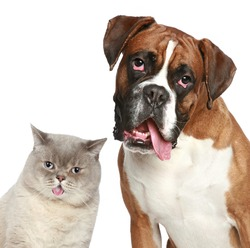 Cat and dog, close-up portrait on a white background