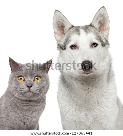 Cat and dog. Close-up portrait on a white background