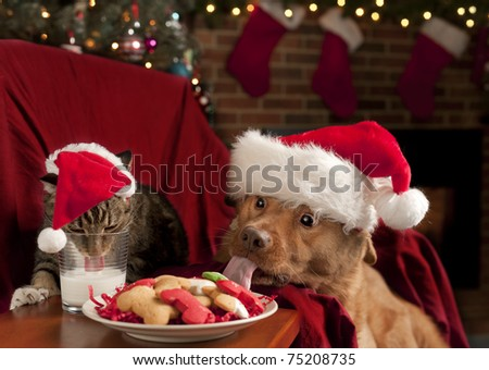 Cat and Dog eating and drinking Santa\'s cookies and milk.