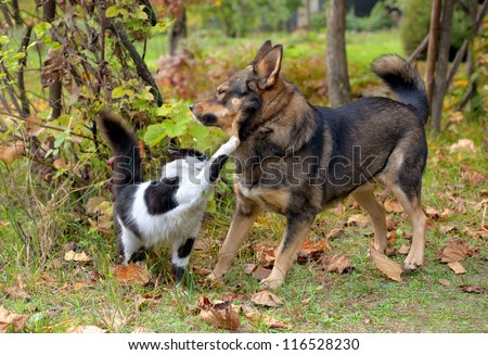 Cat and dog fighting each other