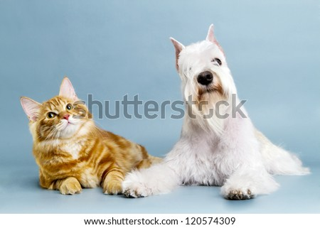 Cat and dog friends.