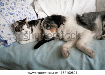 Cat And Dog Friends Nap Together On A Bed