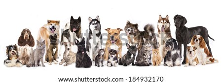 Groups Of Cats And Dogs Friends Illustrations