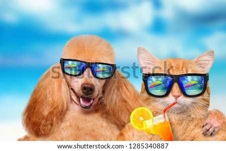 cb0245a6929 cat and dog in goggles on the rest