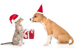 Cat and dog in red christmas hats exchange gifts. isolated on white background