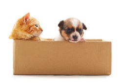 Cat and dog in the box isolated on a white background.