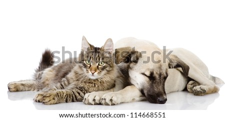 cat and dog. isolated on white background
