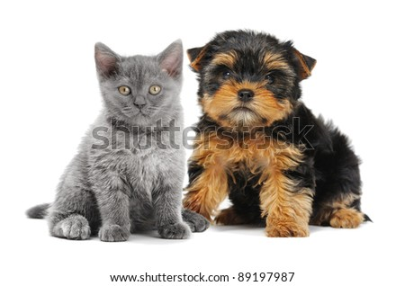 cat and dog isolated on white background - stock photo