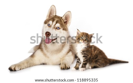 Cat and dog,  kitten  Maine Coon and  husky puppy