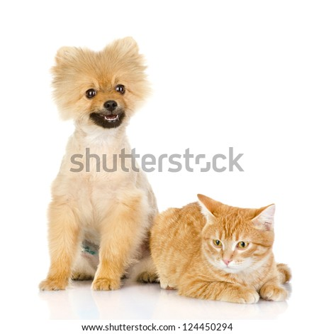 cat and dog look in the camera. isolated on white background
