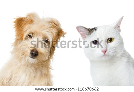 cat and dog looking and camera.  isolated on white background