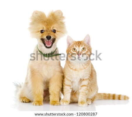 cat and dog looking at camera. isolated on white background