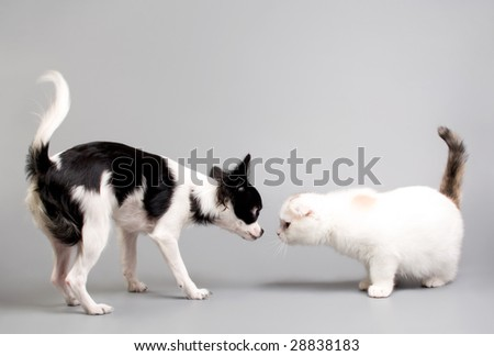 cat and dog looking at each other
