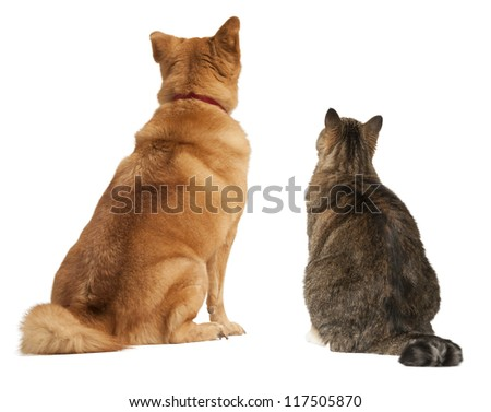 Cat and dog looking up. Add your text above.
