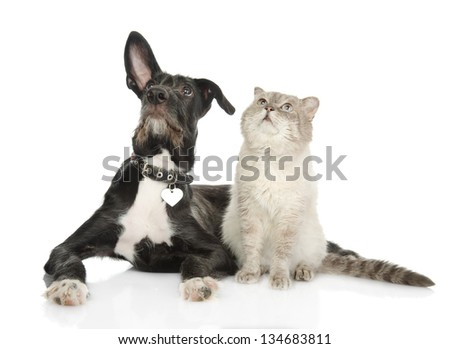 cat and dog looking up. isolated on white background