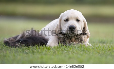 Cat And Dog Love, Friendship, Meeting, Acquaintance