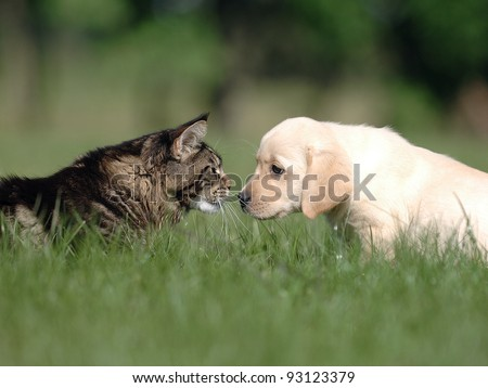 Cat and dog love, friendship, meeting, acquaintance.